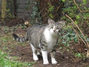 Stan Carey - funny cat