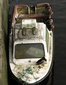 Stan Carey - mallards on boat