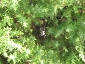 Stan Carey - spider & web