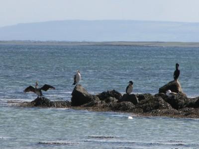 Stan Carey - cormorant 10, Galway