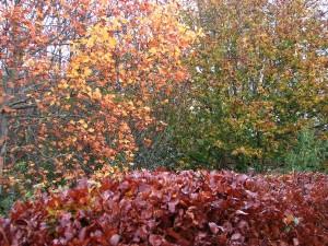 Stan Carey - autumn leaves