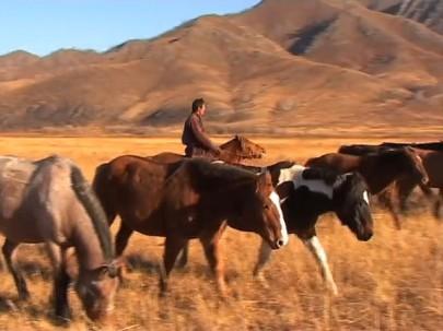 Living with Herds - Vocalisation Dictionary - Natasha Fijn 1
