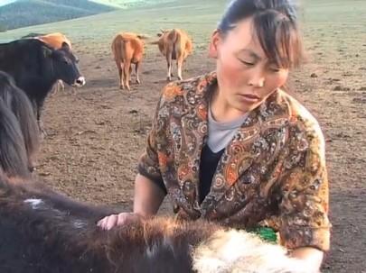 Living with Herds - Vocalisation Dictionary - Natasha Fijn 2