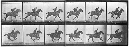 Sequence of a horse galloping by Eadweard Muybridge