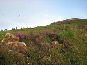 stan carey - croagh patrick mountain climb - grass, heather and ferns at base