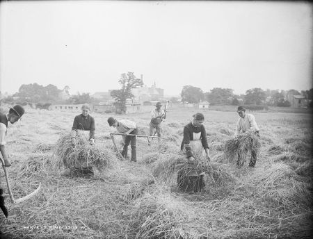 National Library of Ireland - Harvest Time