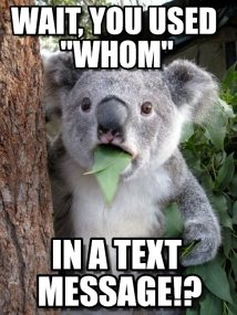 stan carey - surprised koala meme - you used 'whom' in a text message