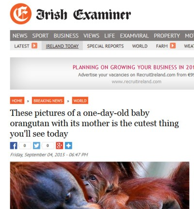 irish examiner headline proximity effect grammatical agreement