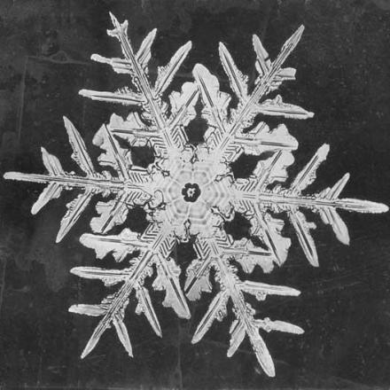 close-up image of a snowflake