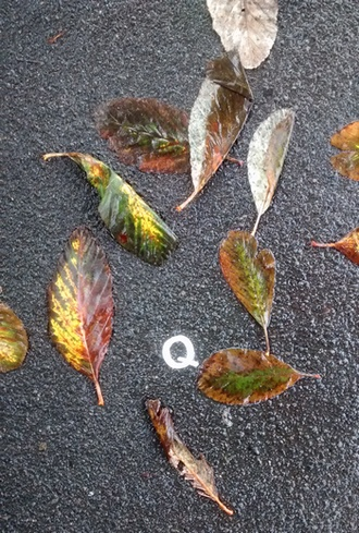 Photo of about 1 square metre of wet footpath, with a white letter Q stencilled on the ground, surrounded by a dozen or so colourful autumn leaves.