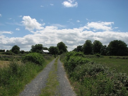A scenic view from the west of Ireland: Under a bright blue sky with puffy white clouds runs a narrow country lane from the bottom of the photo to the middle, where it vanishes into trees and hedges. Green fields lie on either side, and the roof of a shed can be seen shining in the near distance among a clump of trees.